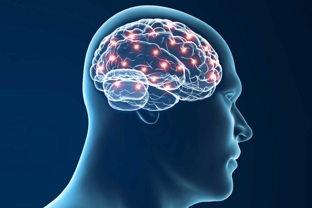 Geförderte Studien - Untersuchung der Neuroplastizität via TMS - Nerven im Gehirn