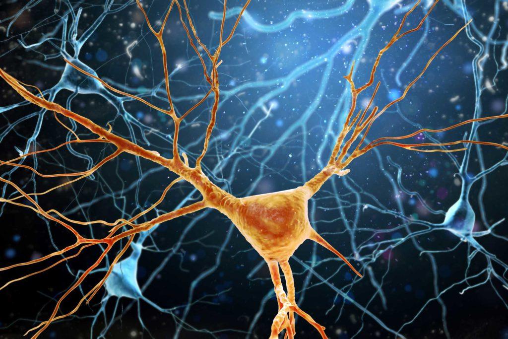 Geförderte Studien - Nervenzellen